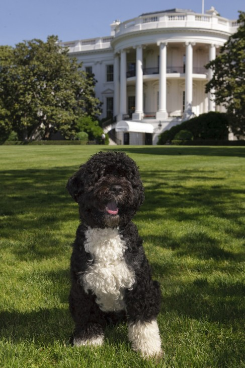 Bo the Dog is a big guy with fluffy-curly poodle-like fur that curls over his eyes. He sits on the grass of the South Lawn with the White House in the background. We'd swear that he was smiling.